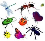 bugs-and-insects
